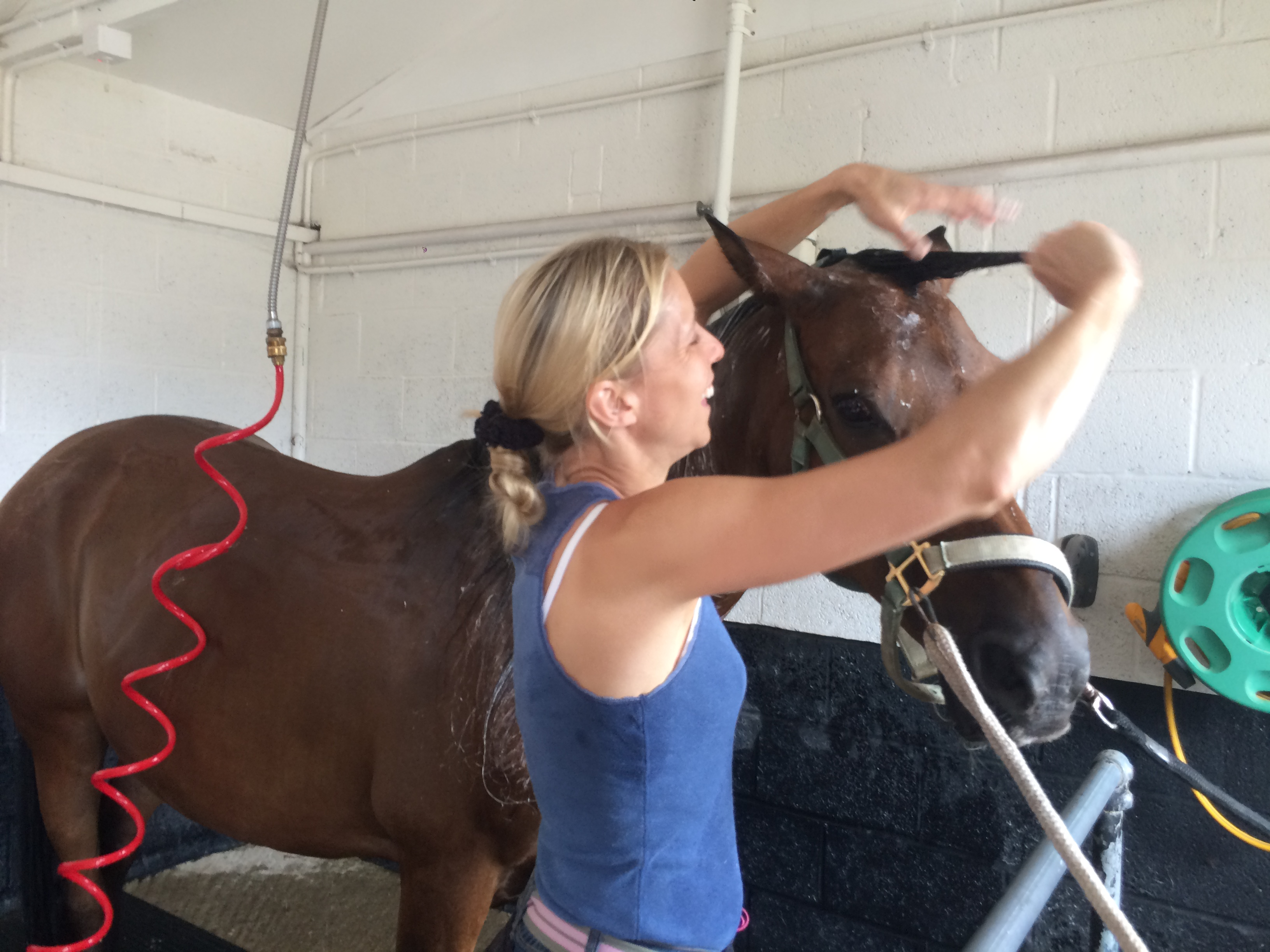 The solarium ensures that your horse is always in prime condition and ready for shows or events