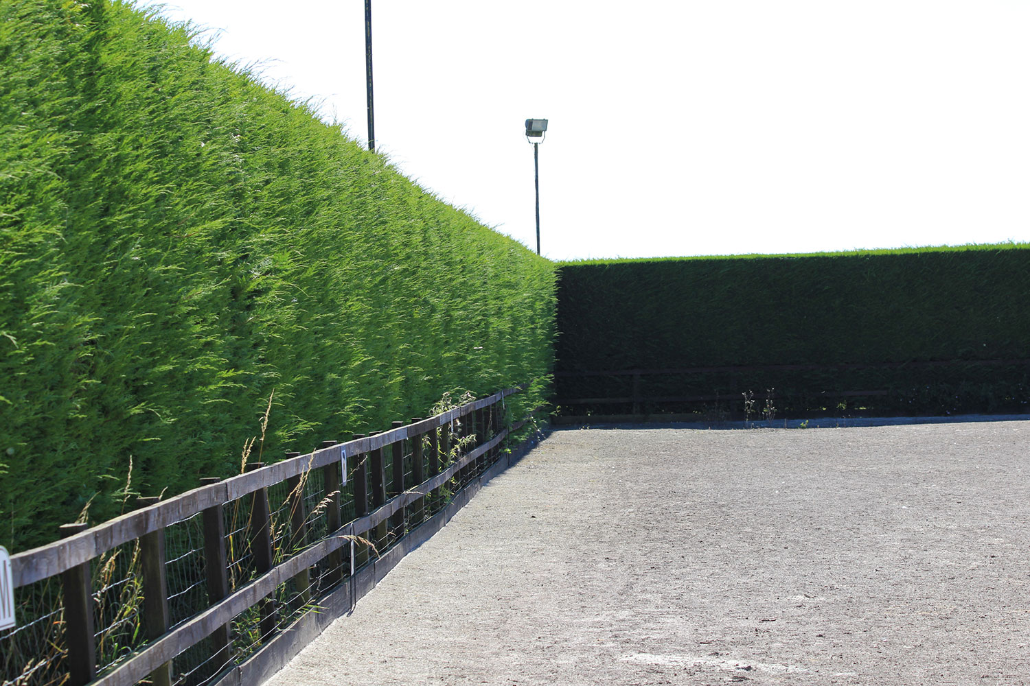our arena is enclosed on two sides by a huge conifer hedge